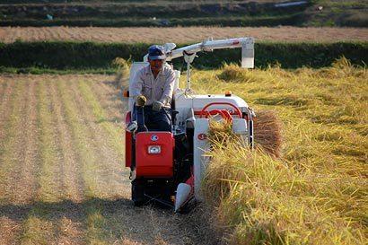 2009稲刈り風景01