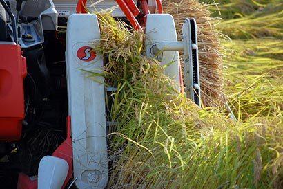 2009稲刈り風景02