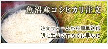 魚沼産コシヒカリ値段・価格